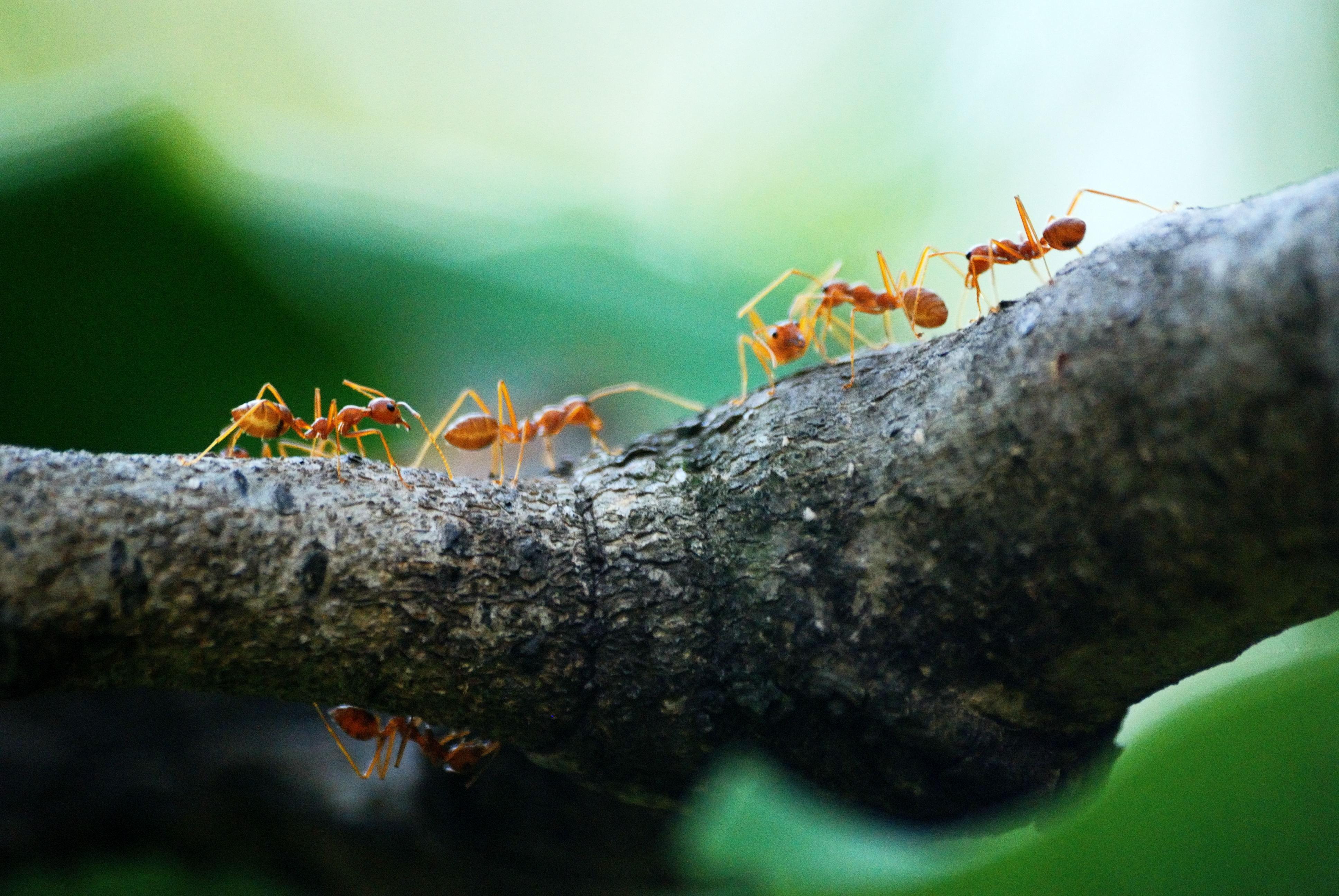 並非毫無貢獻的懶惰螞蟻